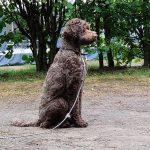 hond op wacht